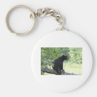 black bear sitting in tree keychain