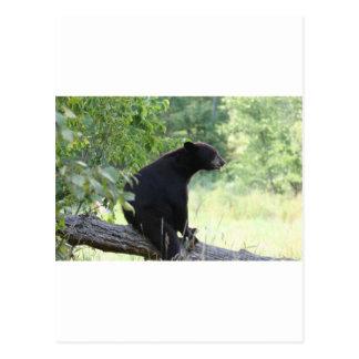 black bear sitting in tree postcard