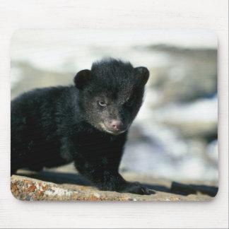 Black Bear-small cub Mouse Pad