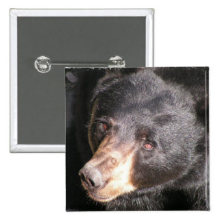 Black Bear Square Button