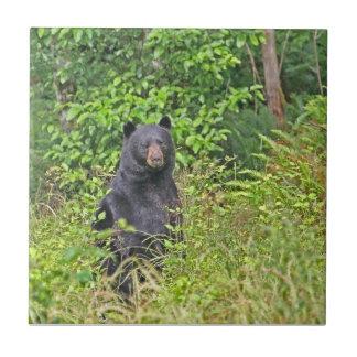 Black Bear Standing Up Tile