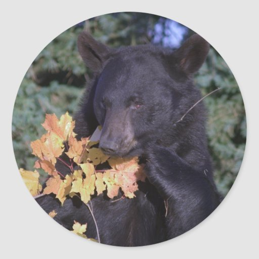 Black Bear Round Sticker