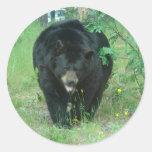 Black bear stickers