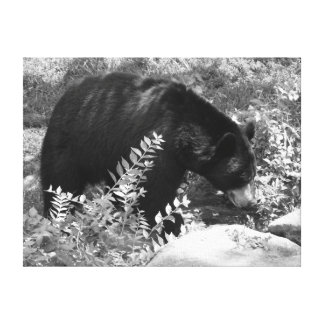Black Bear Stretched Canvas Print