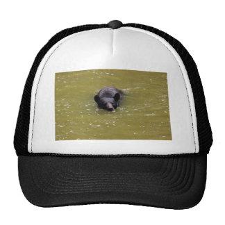 Black Bear Swimming Hats