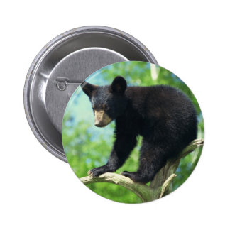 Black Bear Up A Tree Pinback Button