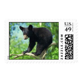 Black Bear Up A Tree Postage Stamp