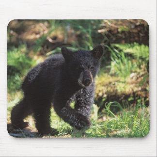 black bear, Ursus americanus, cub at Anan Mouse Pad