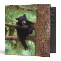 black bear, Ursus americanus, cub in a tree 3 Ring Binder