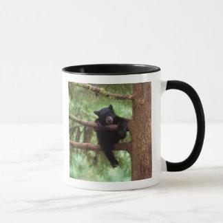 black bear, Ursus americanus, cub in a tree Mug