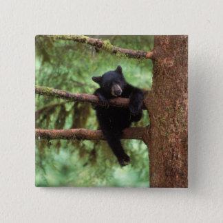 black bear, Ursus americanus, cub in a tree Pinback Button