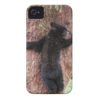 black bear, Ursus americanus, cub in tree, Anan 2 Case-Mate iPhone 4 Case