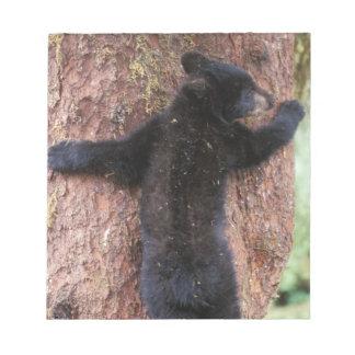 black bear, Ursus americanus, cub in tree, Anan 2 Note Pad