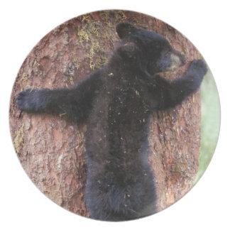 black bear, Ursus americanus, cub in tree, Anan 2 Party Plate