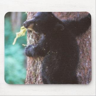black bear, Ursus americanus, cub in tree, Mouse Pad