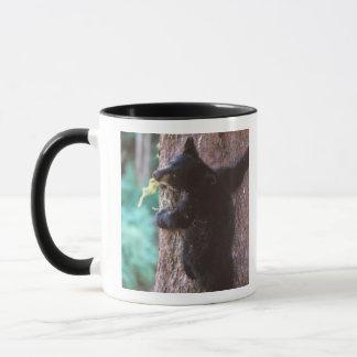 black bear, Ursus americanus, cub in tree, Mug