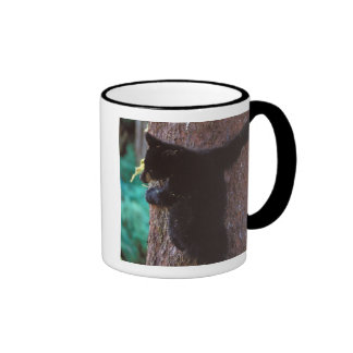 black bear, Ursus americanus, spring cub in a Mugs