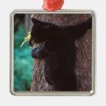 black bear, Ursus americanus, spring cub in a Christmas Tree Ornaments