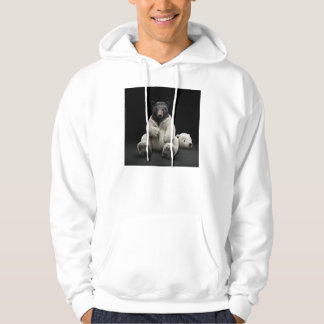 Black bear wearing polar bear costume hoodie