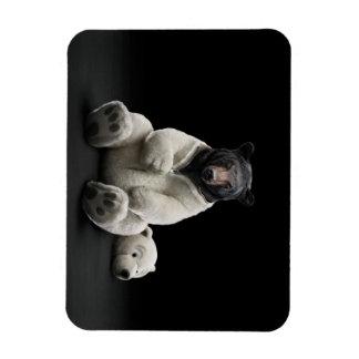 Black bear wearing polar bear costume magnet