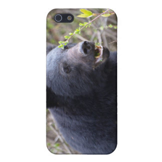 Black Bear Wildlife iPhone Case