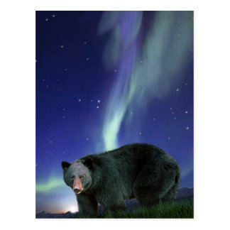 BLACK BEAR Wildlife Postcards