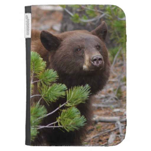 Black Bear with Blond Color Kindle 3 Cases