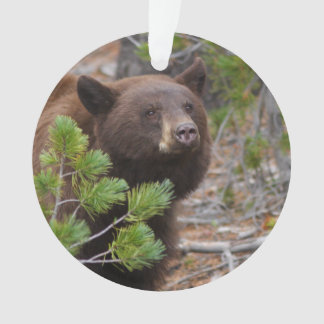 Black Bear with Blond Color Ornament