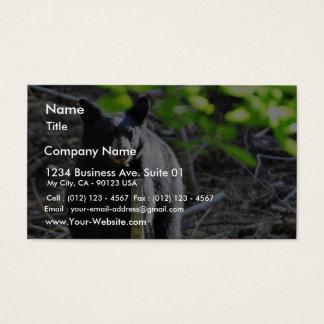 Black Bears Business Card