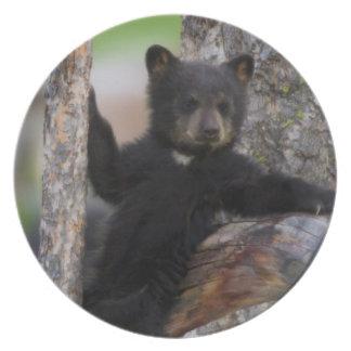 Black Bears Cub Lounging Melamine Plate