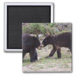 Black Bears Cubs 2 Inch Square Magnet