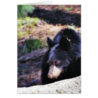 Black Bears Furry Card
