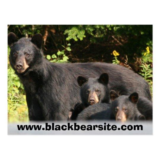 black bears postcard