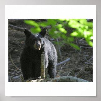 black-bears poster
