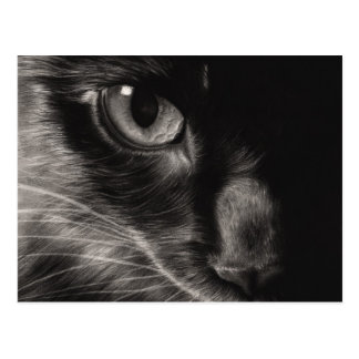 Black Beauty Cat Postcard
