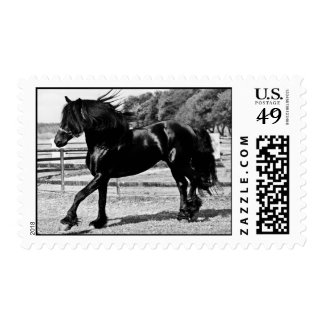 Black Beauty Horse Postage