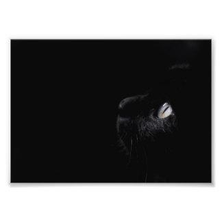 Black beauty, photo print