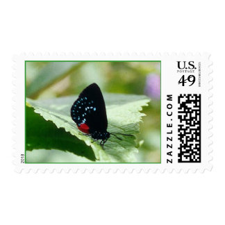 Black Beauty - postage stamps