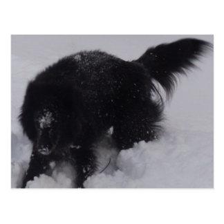Black Belgian Shepherd in the Snow Postcard