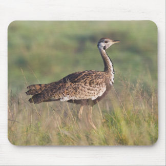 Black-Bellied Bustard, Ngorongoro Conservation Mouse Pad