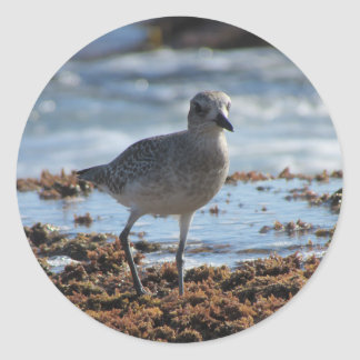 Black-bellied Plover Stickers