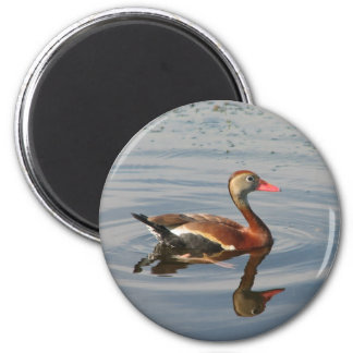 Black-bellied Whistling Duck 2 Inch Round Magnet