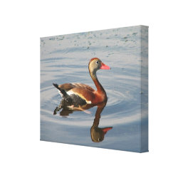 Premium Wrapped Canvas with Black-bellied Whistling Duck design