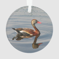 Circle Acrylic Ornament with Black-bellied Whistling Duck design