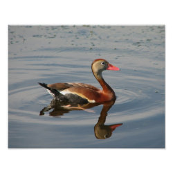 Matte Poster with Black-bellied Whistling Duck design
