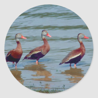 Black-Bellied Whistling Ducks Classic Round Sticker