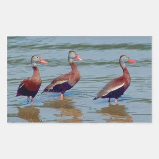 Black-Bellied Whistling Ducks Rectangular Sticker