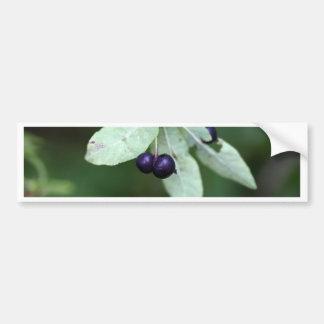 Black berried honeysuckle (Lonicera nigra) Bumper Sticker