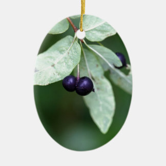 Black berried honeysuckle (Lonicera nigra) Ceramic Ornament
