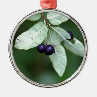 Black berried honeysuckle (Lonicera nigra) Metal Ornament